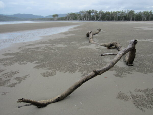 Australia - Cape Tribulation, Beach View
