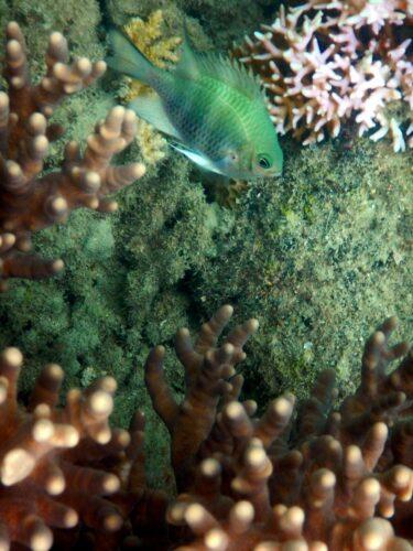 Australia - Great Barrier Reef, Fish