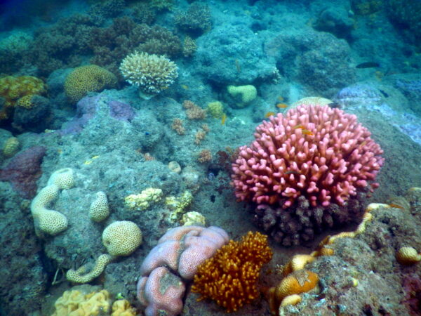 Australia - Great Barrier Reef, Fish And Corals