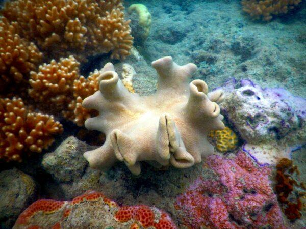 Australia - Great Barrier Reef, Shell