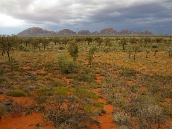 Australia, Kata Tjuta Landscape