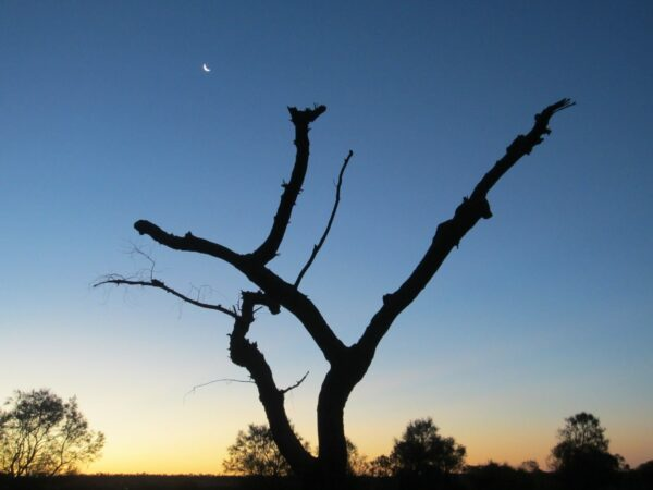 Australia Outback Tree In Sunset