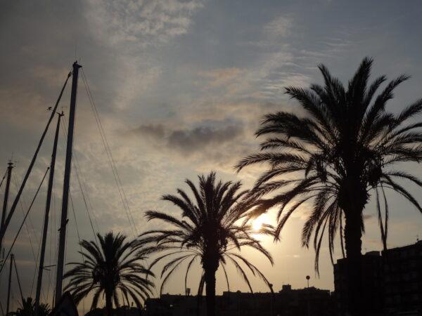 Barcelona, Sunset Palms