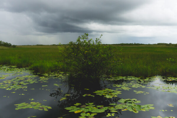 Everglades National Park, Clouds Reflecting In Water