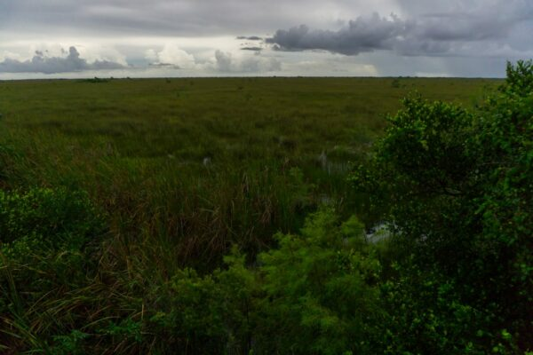 Everglades National Park Grassland