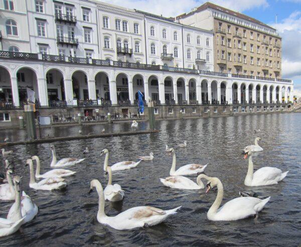 Hamburg, Swans