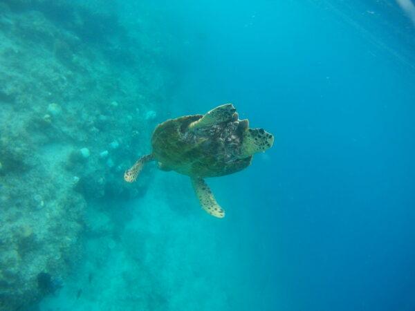 Indonesia - Gili Air, Turtle Snorkeling