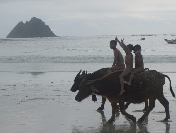 Indonesia - Lombok, Children Riding Cows On Beach