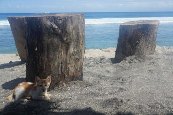 Indonesia - Lombok, Cat On Beach