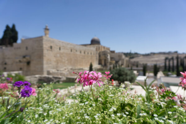 Israel - Jerusalem, Flowers In Front Of Temple Mount