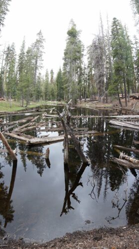Lassen Volcanic National Park, Forest