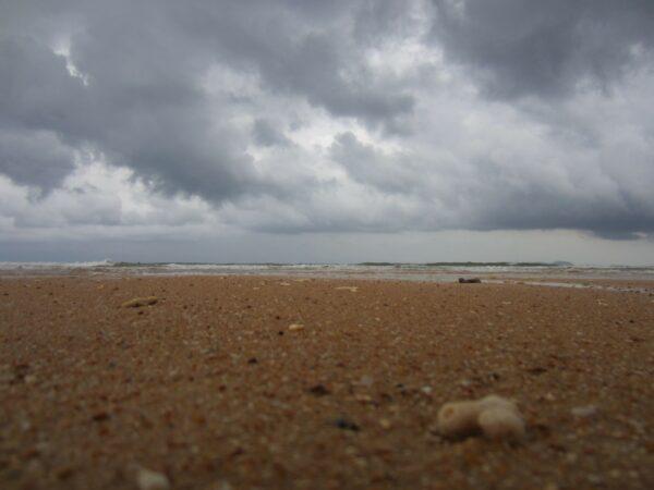 Malaysia - Tioman Island, Corals On Beach