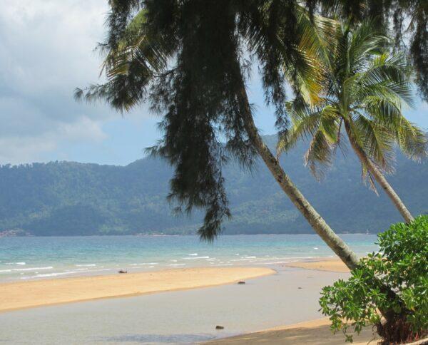 Malaysia - Tioman Island, Palm Trees On Beach