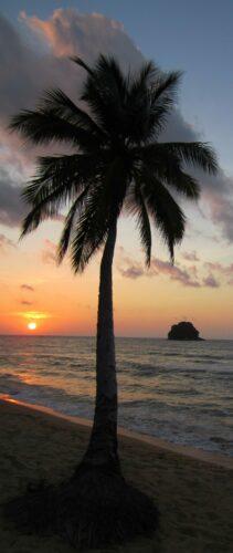 Malaysia - Tioman Island, Sunset Palm View