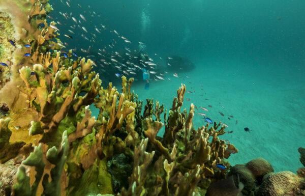 Mexico - Yucatan, Corals