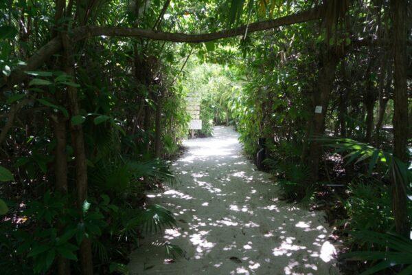 Mexico - Yucatan, Way To Beach