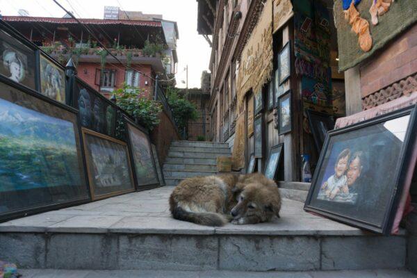 Nepal - Bhaktapur, Dog In Art Gallery