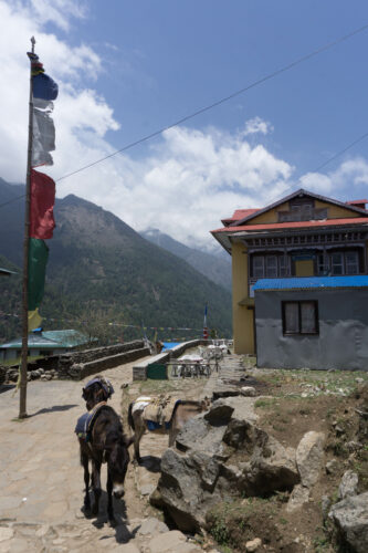 Nepal, Donkeys And Flag Pole