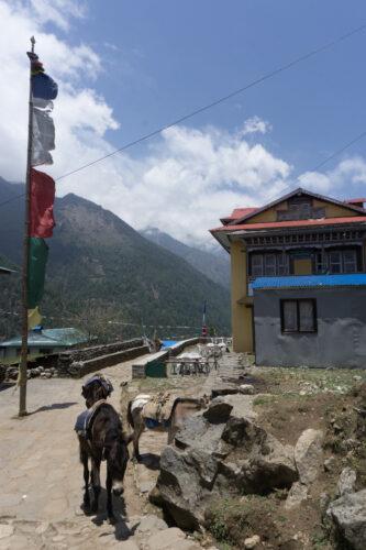 Nepal, Donkeys And Flag Pole