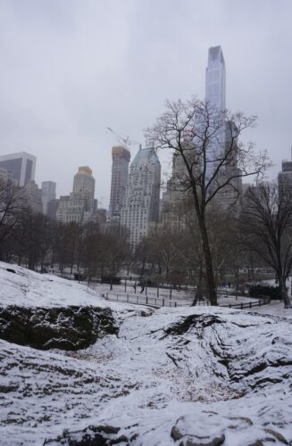 New York, Snowing At Central Park