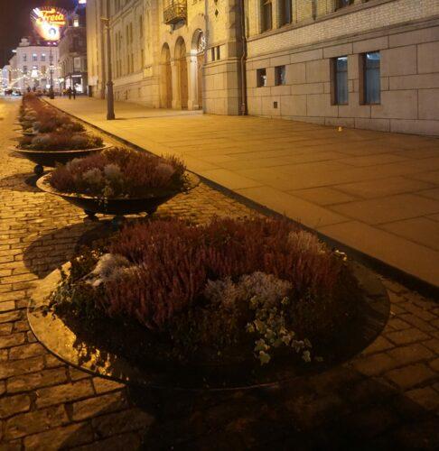 Oslo, Plant Pots On Street