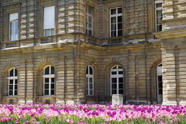Paris Jardin Du Luxembourg Tulips