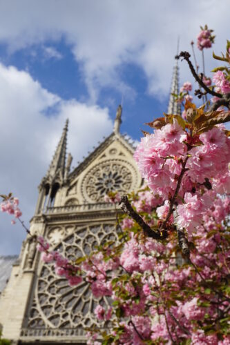 Paris, Tree In Front Of Notre Dame