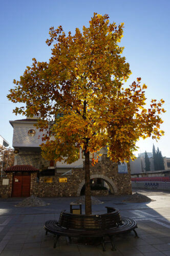Skopje, Tree