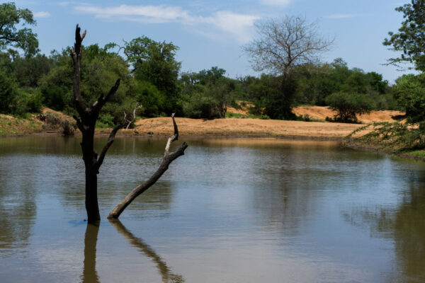 South Africa - Hoedspruit, Waterhole