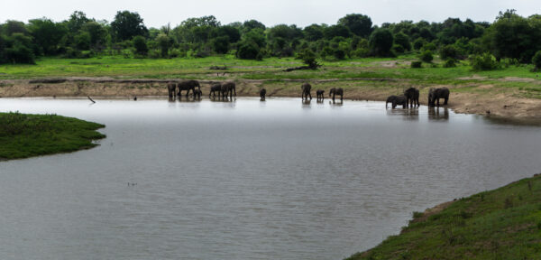 South Africa - Kruger National Park, Elephants At Waterhole
