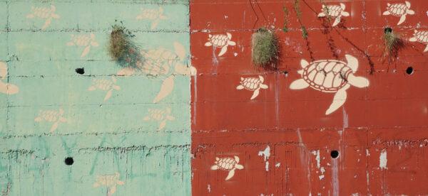 Caretta Caretta Turtle Grafitti